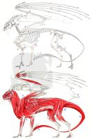 European Dragon Anatomy by FrancesLane
