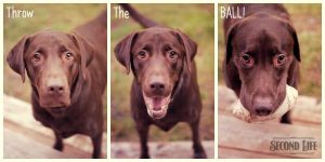 Throw The BALL! by DillonStein