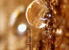 Pure Gold by Doodoox