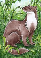 Another Stone Marten - ATC by Merinid-DE