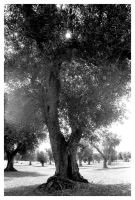 The wise old tree_Puglia2004 by Xalira