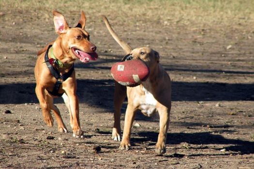 Football Game by dallaspetphoto