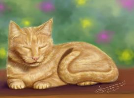 orange kitten by wl551