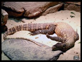 The Land of the Lounge Lizards by LarryDNJR