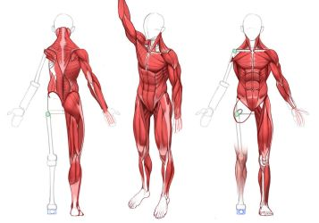 ULTIMATE Anatomy by MarcBrunet