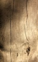 Driftwood Texture 01 by Thy-Darkest-Hour
