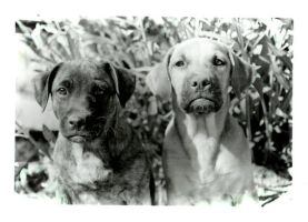 Dogs by deathofaxgunfigther