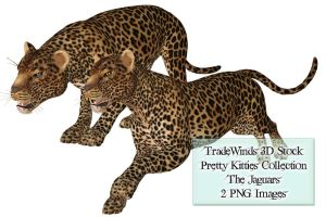 TW3D Two Jaguars by TW3DSTOCK