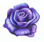 Daily Sketch 45 - Purple Rose by YikYik