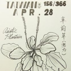 TW 366-4/28_Asiatic Plantain by mozusart