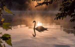 Swimming In The Morningsun by M-M-F