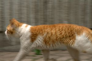 Day 104: Fleeing Cat by coolwanglu