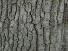 Bark Texture 6 by Orangen-Stock