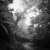 Rain Forest by Hengki24