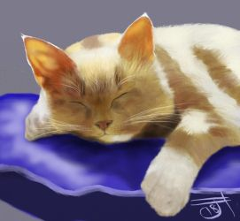 Sleeping Cat by enug66