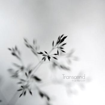 Transcend by Oer-Wout