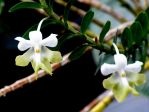 Orchid 2 by intouch