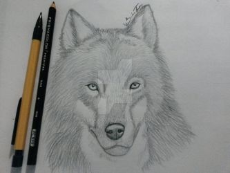 wolf sketch (complete) by Kurai667