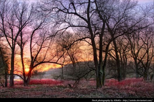 Sunset landscape trees - Stock by AStoKo by AStoKo