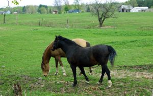 Brown and Blackish Horses by DaLeahWeathers