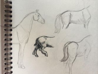 Horse sketch 1 by Charismor