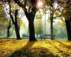 a pleasant autumn day. by rose-petals