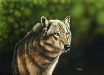 Ole - Timber Wolf by shonechacko