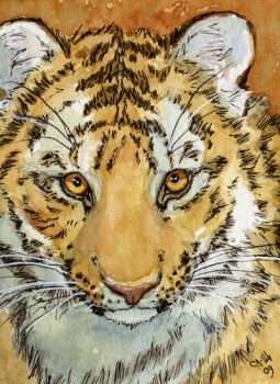 ACEO Sweet Tiger by sschukina