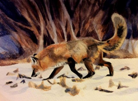 Red fox in winter by Isadorrah