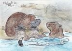 Platypus and Water Rat by Rahball