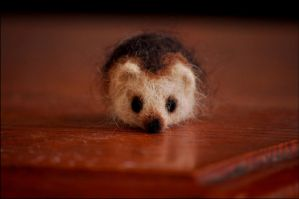 Felted Hedgie by nikkiburr