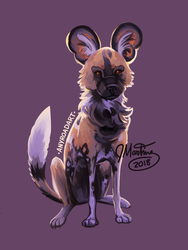 African Wild Dog by anyroad