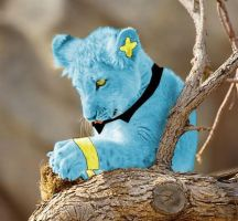 Shinx in real life. by NayaChicken