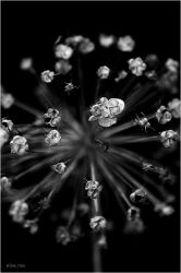 b/w nature.4 by Ilmael
