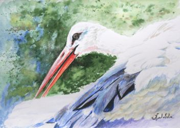 Stork by danuta50