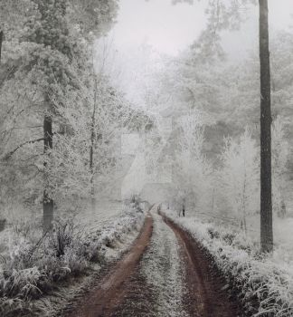 Winter path II - premium stock by Aeternum-designs