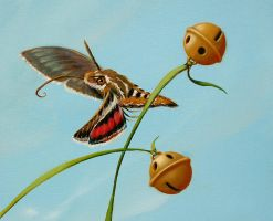 Moon Chasers Too - Humbd. moth by LindaRHerzog