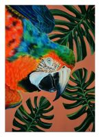 Catalina Macaw by Verenique
