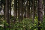 Deep in the mystic forest by Toghar