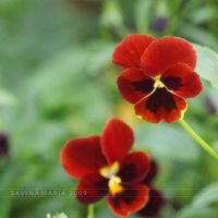 lovely flowers_92 by Marsulu