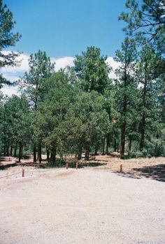 Pines at Pine Flat #5 by Texas1964