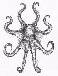 Octopus by Kalo546