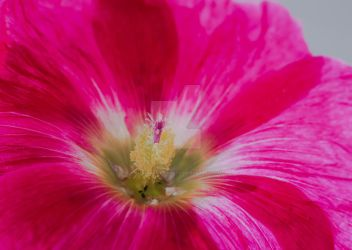 a bit of colour for all you out there... by clochartist-photo