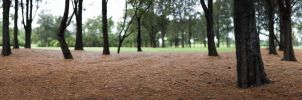 Earlwood park 3 by ximo
