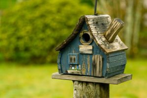 Bird House by snakstock