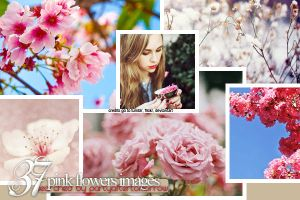 pink flower stock images by Blowthat