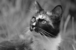 black and white cat by SvitakovaEva