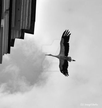 Sky High Stork by LSPhotographyStore