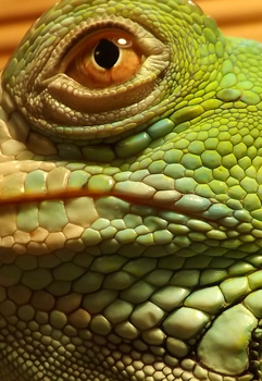 Jax, The Green Iguana: Close Up by Kaylee-Photography