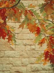 Autumn by ulyce